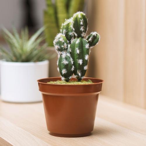 Thumbs Up Cactus Safe